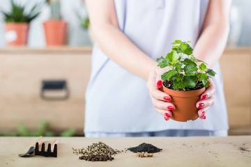 Think green concept. Indoor gardening hobby. Woman hold houseplant for repotting.