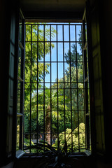 Green palm trees and leaves as seen from inside the house, through a window, near Lake Maggiore, Italy