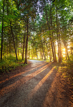 Summer Sunset Forest Trail