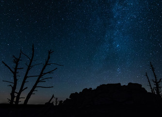 Arbre mort la nuit sur fond de voie lactée et ciel nocturne, loin de toute pollution lumineuse en Lozère