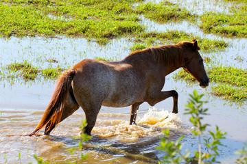 Um cavalo se refrescando no banhado