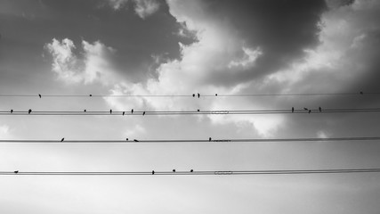 Black White Monochrome Birds Sitting on Power Lines Clouds in Sky Peaceful
