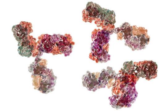 Molecular model of antibody taking part in immune defense. Molecule of immunoglobulin, 3D illustration