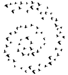 Vector Flying Birds