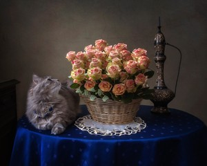 Still life with luxurious bouquet of roses and pretty kitty