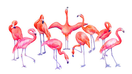 Group of tropical pink flamingos bird (flame-colored) in different poses. Hand drawn watercolor painting illustration isolated on white background.