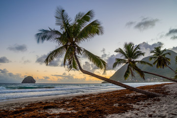 Sunset over Caribbean Martinique beach coconut (Le Diamant)