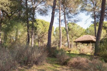 Details of the Doñana park