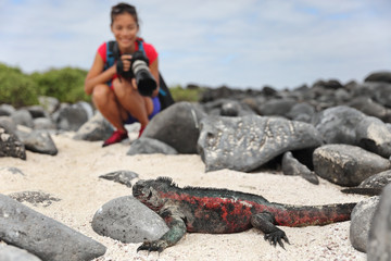 Galapagos Christmas Iguana and tourist wildlife photographer taking picture. Marine iguana on Espanola Island, Ecuador, South America. Woman on Galapagos cruise ship adventure travel holidays vacation