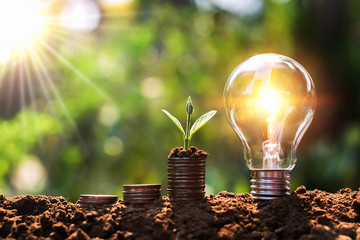 light bulb on soil with young plant growing on money stack. saving finance and energy concept