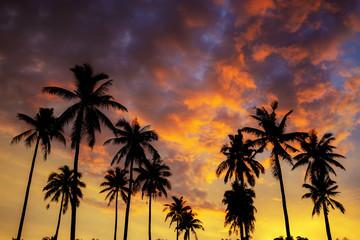 Silhouette palm tree on sky.