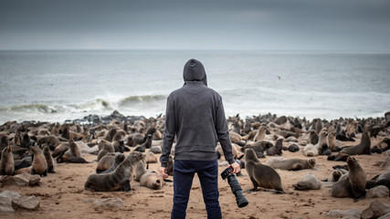 Hoodie man traveler and photographer standing over ten thousands fur seals in Cape Cross, Skeleton Coast National Park, Namibia, Africa. Wildlife photography concept