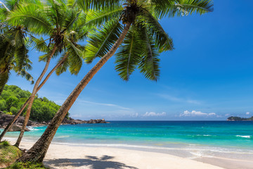 View of exotic tropical beach with white sand and palms around.