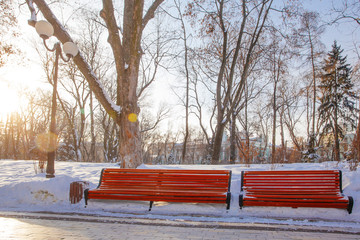 Alley in park  in winter time taken in Kyiv, Ukraine