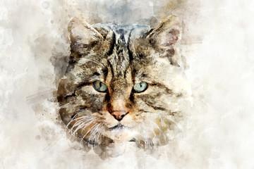 Cat - watercolor illustration portrait
