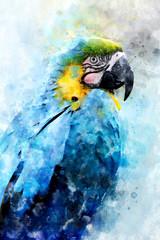 Parrot - watercolor illustration portrait