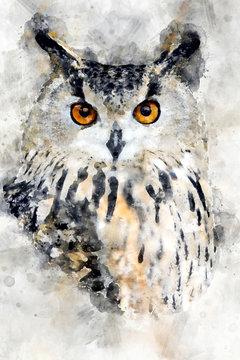 Owl - watercolor illustration portrait