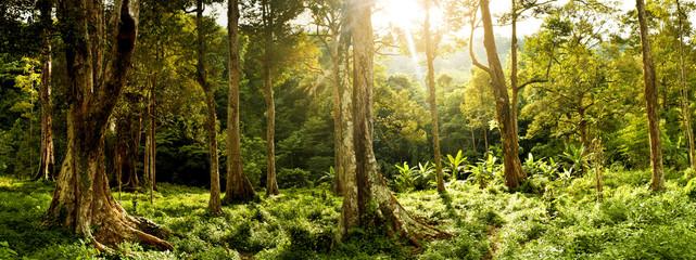 Labuhan haji aceh,forest