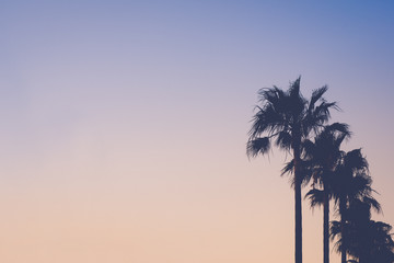 Row of Palm Trees Against Pastel Colored Sky