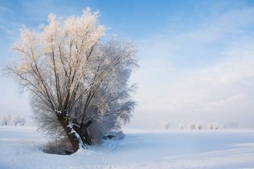 piękny zimowy krajobraz, oszronione drzewa