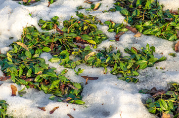 Thaw, snow and ice melt, sun, light and spring return, grass comes out, close up
