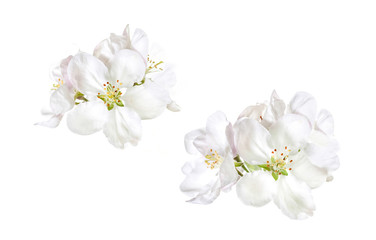 Floral wallpaper, white spring flowers isolated on white background