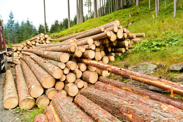 pile of wood, spruce
