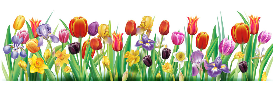 Arrangement with multicolor spring flowers over white background