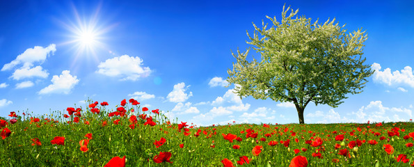 Photo sur Plexiglas Bleu ciel Blossoming lone tree on a colorful meadow with poppy flowers, with the sun shining bright in the deep blue sky