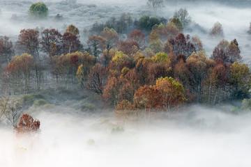 Wszystkie kolory jesieni w lesie z mgłą - 248625251