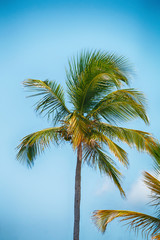 tropical palm trees against a blue sky