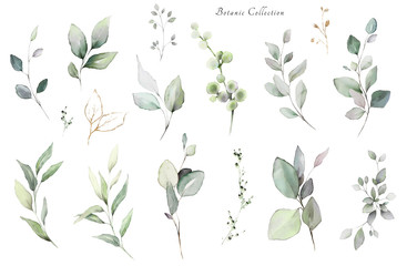 Set watercolor elements -  herbs, leaf. collection, eucalyptus.  illustration isolated on white background,  leaf. Botanic Fotoväggar