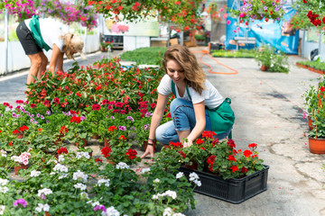 Florists working in plant nursery