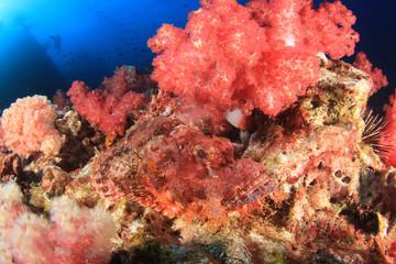 Scorpionfish fish