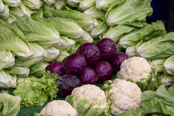 Lettuce and Red Cabbage