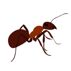 isolated, ant, insect, icon