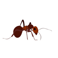 vector, isolated, ant, insect, icon