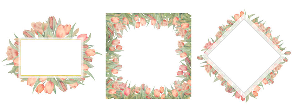 Set of watercolor tulips frames. Drawn by hand. Ideal for logo, wedding invitations, cards