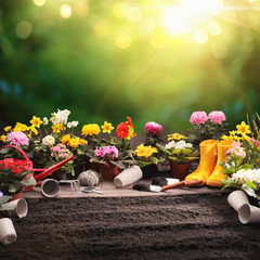Garden Flowers and Plants on a Sunny Background. Gardening Concept