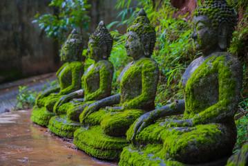 Statue of Buddha, Moss, next to the statue of Buddha