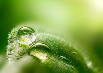 Macro dew drops on a leaf close-up