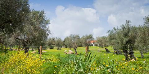 Spring colourful meadow in Portugal, Alentejo blooming meadows of wildflowers.