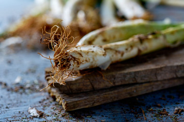 raw calcots, onions typical of Catalonia, Spain