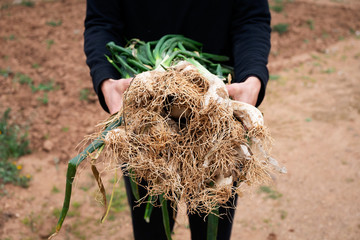 person with calcots, onions typical of Catalonia