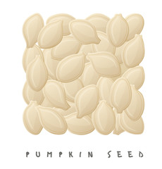 Pumpkin seeds square icon. Cartoon style vector illustration isolated on white background