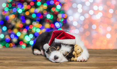 Australian shepherd puppy in red santa hat and eyeglasses sleeping with toy bear with Christmas tree on background. Empty space for text