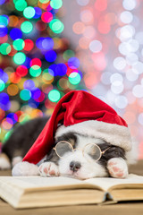 Australian shepherd puppy in red santa hat and eyeglasses sleeping on the book with Christmas tree on background. Empty space for text