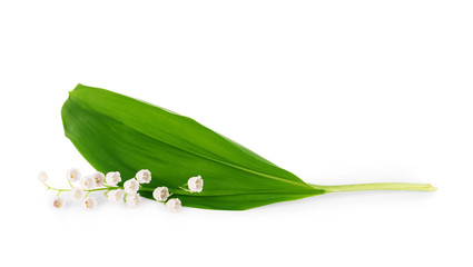 Lily of the valley with leaf on white background