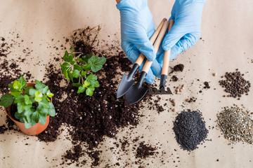 Garden equipment in gloved hands. Indoor gardening concept. Basic tools set on replanting background.