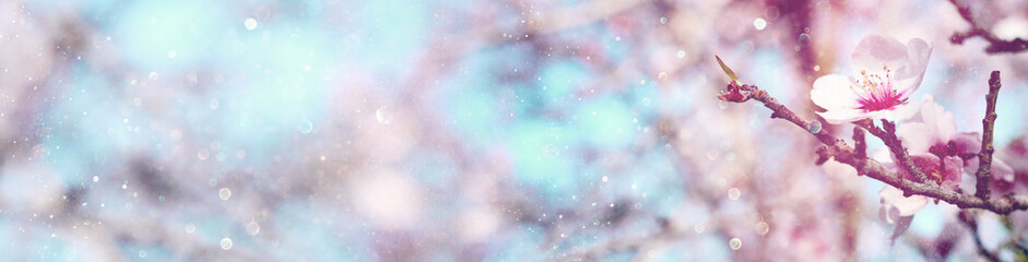 Abstract blurred website banner background of of spring white cherry blossoms tree. selective focus. vintage filtered with glitter overlay.